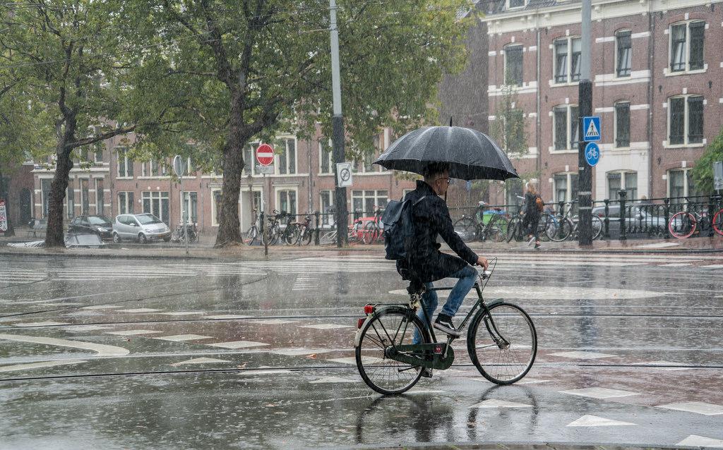 عيوب اللجوء في هولندا